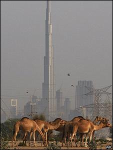 Rascacielos y camellos en Dubai