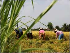 Đồng lúa Nam Bộ