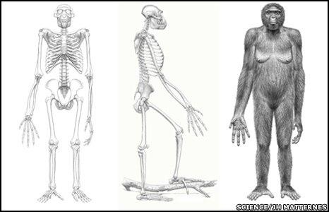 Древнейшией из найденных предков человека