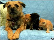 Perro y gatos