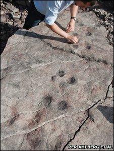 Las huellas fosilizadas de Zachelmie (Foto: P. Ahlberg)