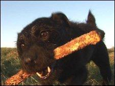 O cão Spike (foto: agência Ross Parry)