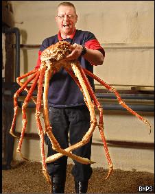 Funcionário do aquário de Birmingham com o 'crabzilla'