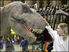 Dinossauro em museu