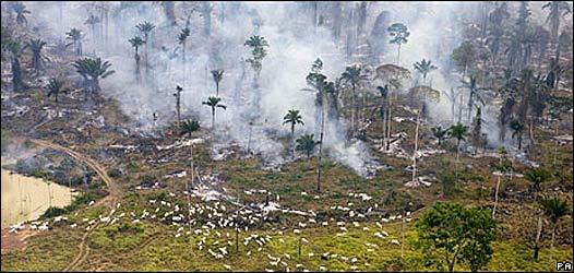 Tala de árboles en el Amazonas