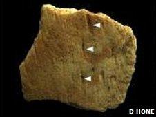 Maarcas de mordida en el hueso del Protoceratops