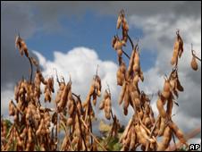 Plantação de soja no Brasil (AP/Arquivo)