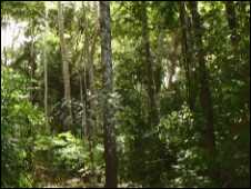 Área de reflorestamento na reserva Sete de Setembro