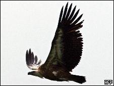 Burung hering