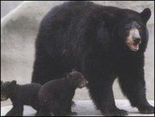 Urso (arquivo)