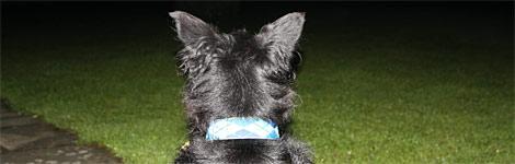 A watch dog
