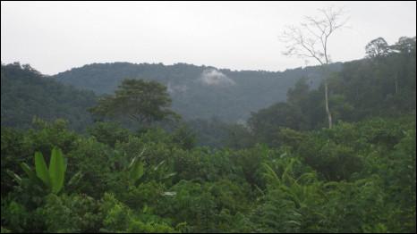 Hutan Aceh
