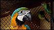 Brasil: golpe al tráfico ilegal de animales silvestres