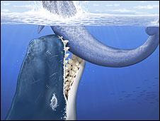Baleia 'Leviathan'