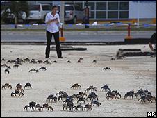 Cangrejos en las calles de Cancún, México.