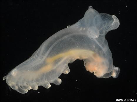 https://wscdn.bbc.co.uk/worldservice/assets/images/2010/07/07/100707105533_marine_species5_466x350_davidshale.jpg
