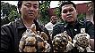 Golpe al tráfico de animales en Malasia