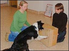 Cada dono demonstrou experiências simples ao seu cão (foto: Clever Dog Lab)