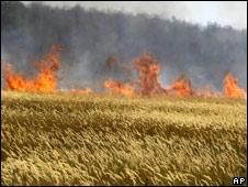 Incêndio próximo a campo de trigo
