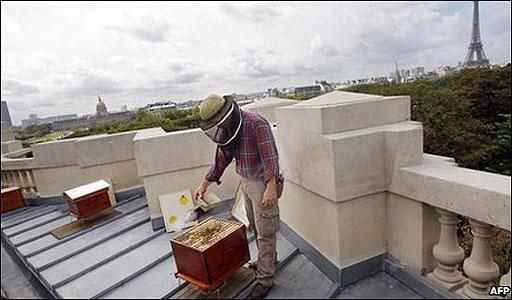 abejas en Paris
