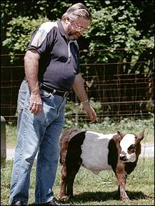 Richard Gradwohl y vaca en miniatura