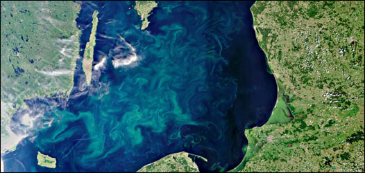 Vista satelital de fitoplancton en el océano