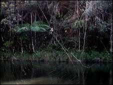 عنكبوت لحاء داروين في مدغشقر
