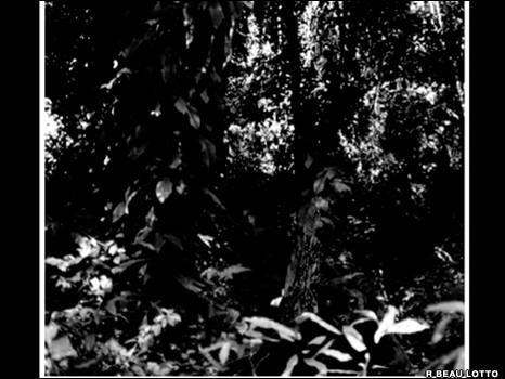 Загадка джунглей