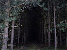 El bosque Rendlesham