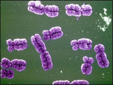 علماء يرسمون معظم الخريطة الوراثية للإنسان 101027221457_chromosome226