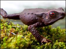 Três espécies, nunca antes identificadas, foram encontradas na Colômbia. Foto: Robin Moore/ILCP