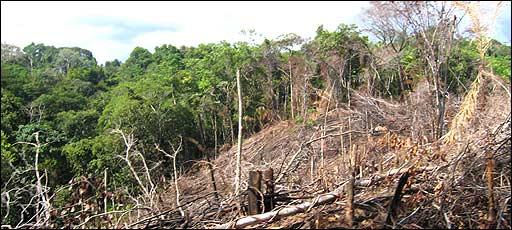 Desforestación Foto: PNUD