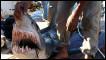 سمكة قرش تم اصطيادها في شرم الشيخ