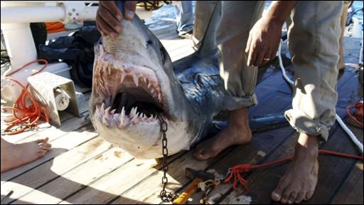 Gelombang serangan ikan hiu beberapa kali menimpa kawasan Laut Merah Mesir