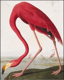"""من كتاب """"طيور أمريكا"""""""