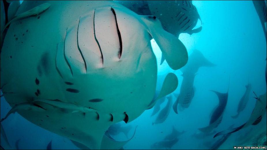 la belleza de la vida marina