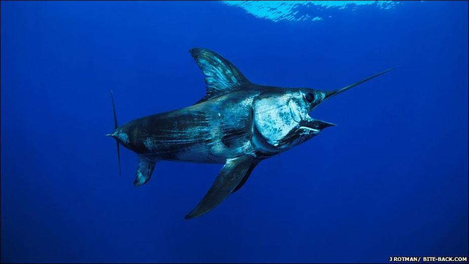 vida marina