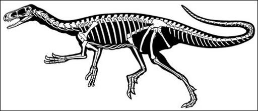 Esqueleto del Eodromaeus