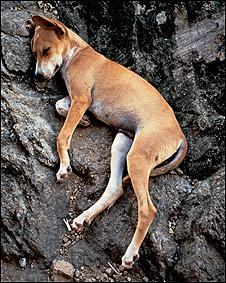 Sleeping Dog. Marian Goodman Gallery © Gabriel Orozco.