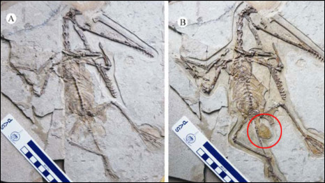 http://wscdn.bbc.co.uk/worldservice/assets/images/2011/01/21/110121110432_pterosaur_egg_466x262_junchanglu_nocredit.jpg