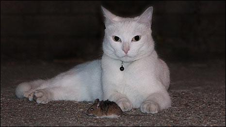 चूहा-बिल्ली