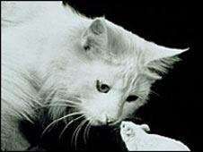 बिल्ली और चूहा