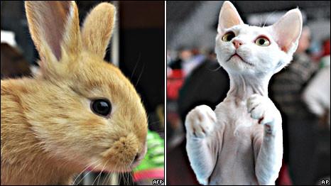Thỏ và Mèo