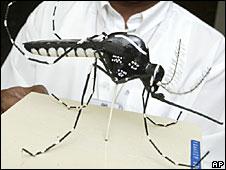 """""""Aedes aegypti"""""""