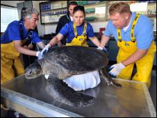 Tartaruga sendo atendida no SeaWorld