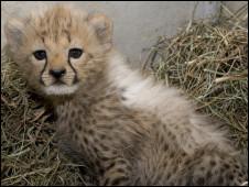 Foto: Mehgan Murphy / Smithsonian's National Zoo