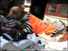 上海某小贩摊上的宠物犬(2/2/2011)