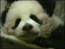 O panda Po
