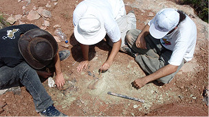fosil_tiarajudens