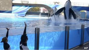 Baleias no SeaWorld Foto: AP